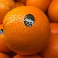 橙子/每个
