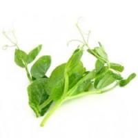 蔬菜类-豆苗/每盒