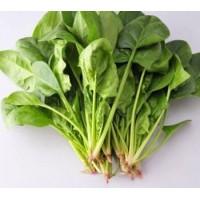 蔬菜类-新鲜菠菜/每袋1磅左右