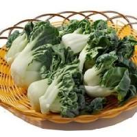 奶白菜苗/每袋1磅左右